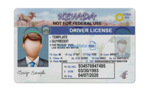 Nevada driver license template.Nevada Driving License psd template